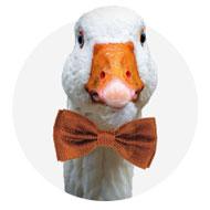 gallery_1_novinka-save-the-duck-2